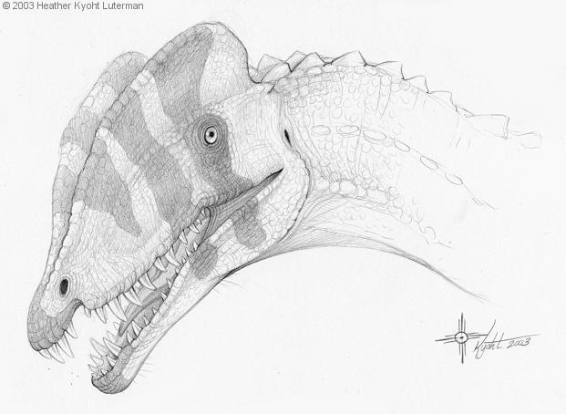 Dilophosaurus Drawing Dilophosaurus jpg by heatherDilophosaurus Drawing