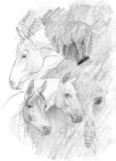graphitehorses.jpg by Therese Larsson (Ailah)