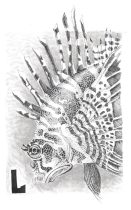 lionfish.jpg by Michelle Rodriguez (Etherrawen)