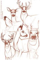 deershm.jpg by Claire Hummel (Shoom'lah)