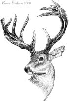 antlers.jpg by Carrie Graham (Velvet)