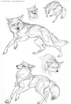 furrsketches.jpg by J.C. Amberlyn (DesertCoyote)