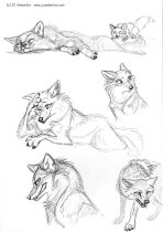 furrsketches2.jpg by J.C. Amberlyn (DesertCoyote)