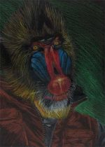mandrill.jpg by Jennifer Fausett (XScout)