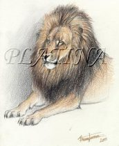 lion3.jpg by Therese Larsson (Ailah)