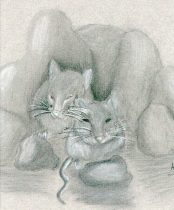 meeces.jpg by Angela Barefield (Meeka the Cat)