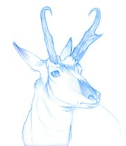 prongs.jpg by Megan Giles (SpaceCat)