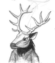 stag02.jpg by Brian Rogers (Marcello Rupelli)