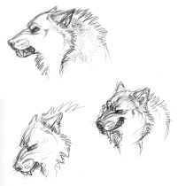 kierrnheadsketches.jpg by L.N. Dornsife (Thornwolf)