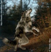 wolfdance.jpg by Timothy Albee (Amadhi)