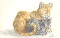 luvcats2.jpg by Gloria Higginbottom (Twap, Snitter)