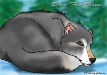 silver.jpg by Audrey Walker (KrazyKlaws, WolfDreamer)