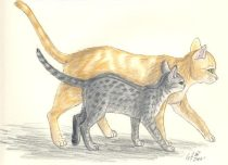 luvcats1.jpg by Gloria Higginbottom (Twap, Snitter)