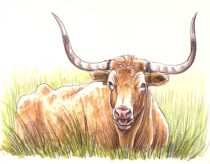 longhorn.jpg by Megan Giles (SpaceCat)