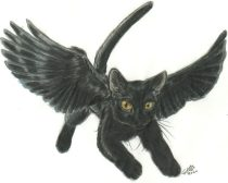 wingcat3.jpg by Gloria Higginbottom (Twap, Snitter)