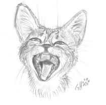 catyawn.jpg by Gloria Higginbottom (Twap, Snitter)