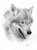 wolfportrait_mark.jpg by Therese Larsson (Ailah)