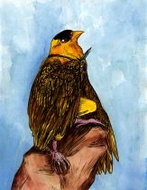 goldfinch.jpg by Grace D. Palmer
