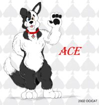 ace.jpg by Jason Williams (Ocicat)