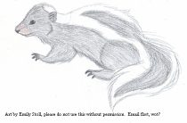es_skunk.jpg by Emily Stoll (SilvaVixen, Flame)